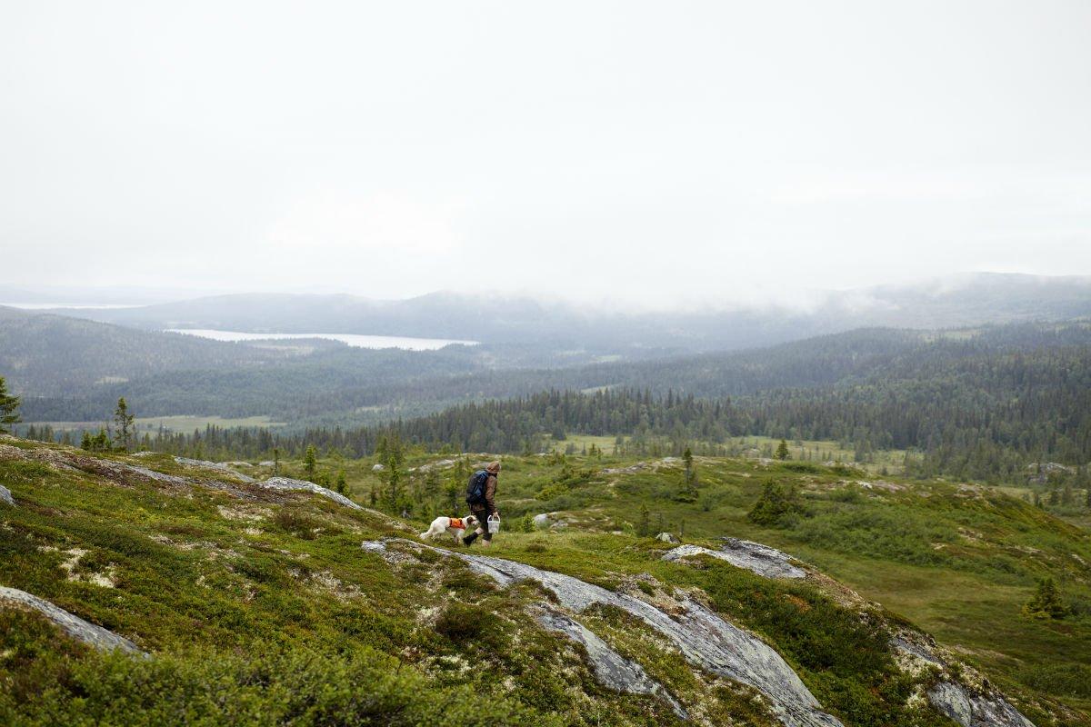 Foraging around Faviken