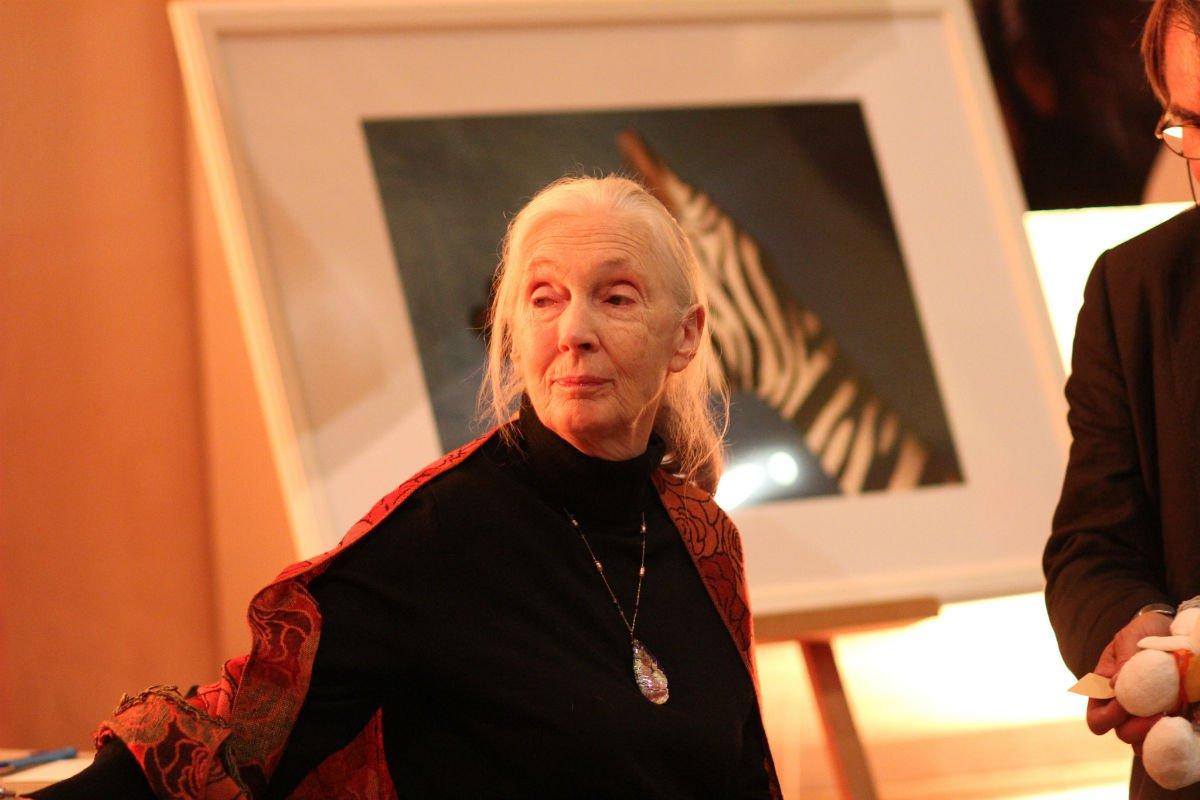 Jane Goodall.
