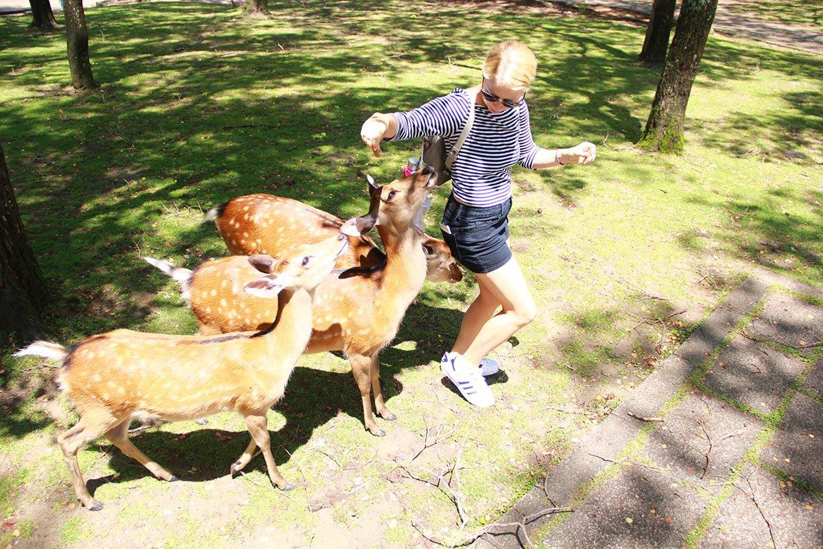 Deers at Nara, Japan