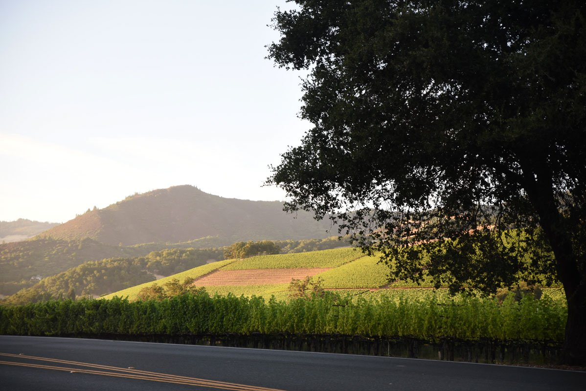 Vineyard road in Sonoma.