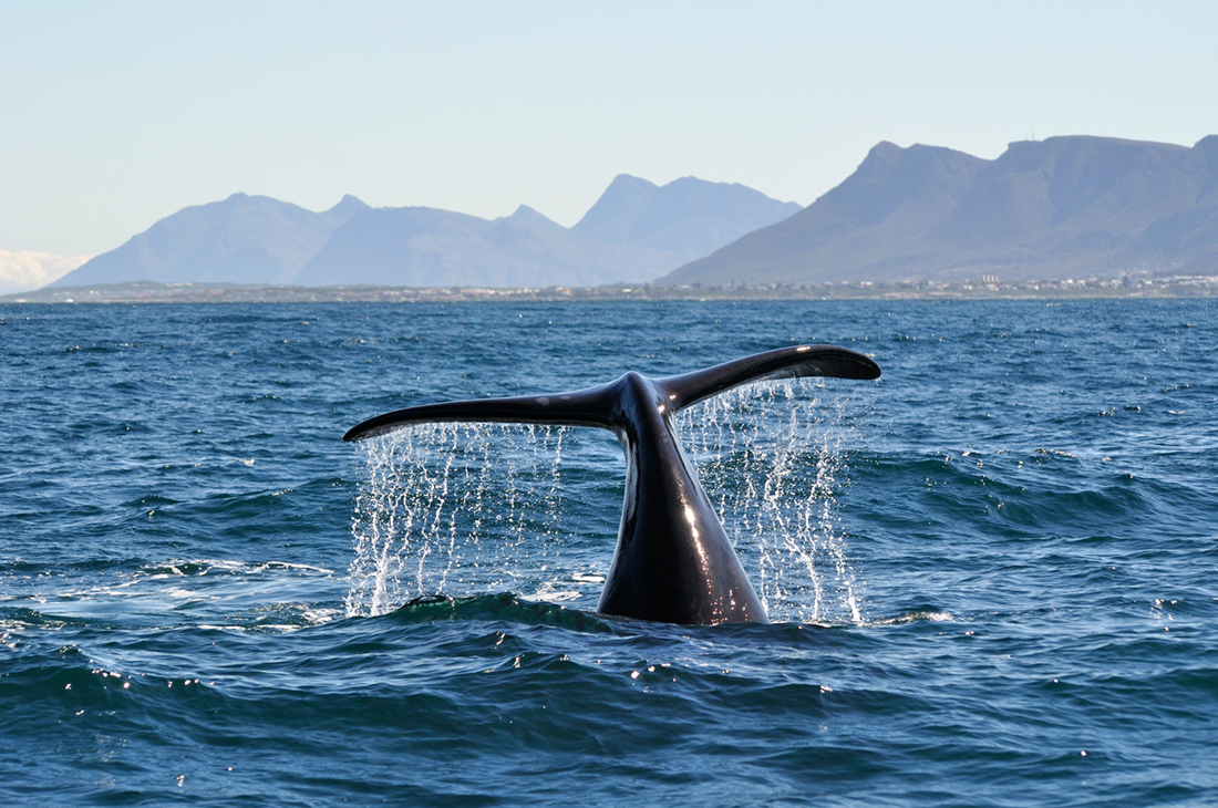 Cape, Wine & Whales Holiday