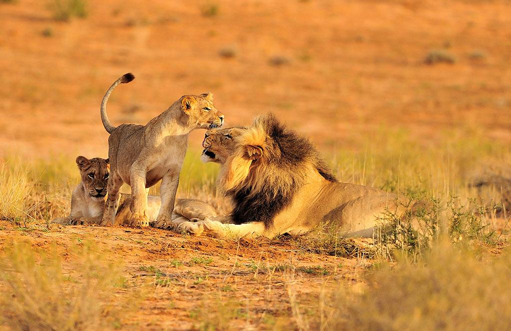 Cape, Kruger & Falls Holiday