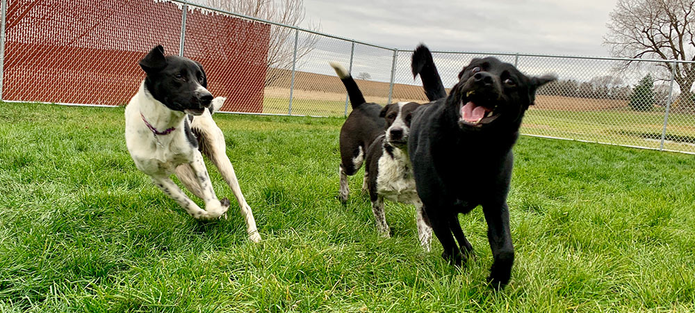 Dog Kennel In Sioux Falls SD 57106 - Smoken Dakota Kennels