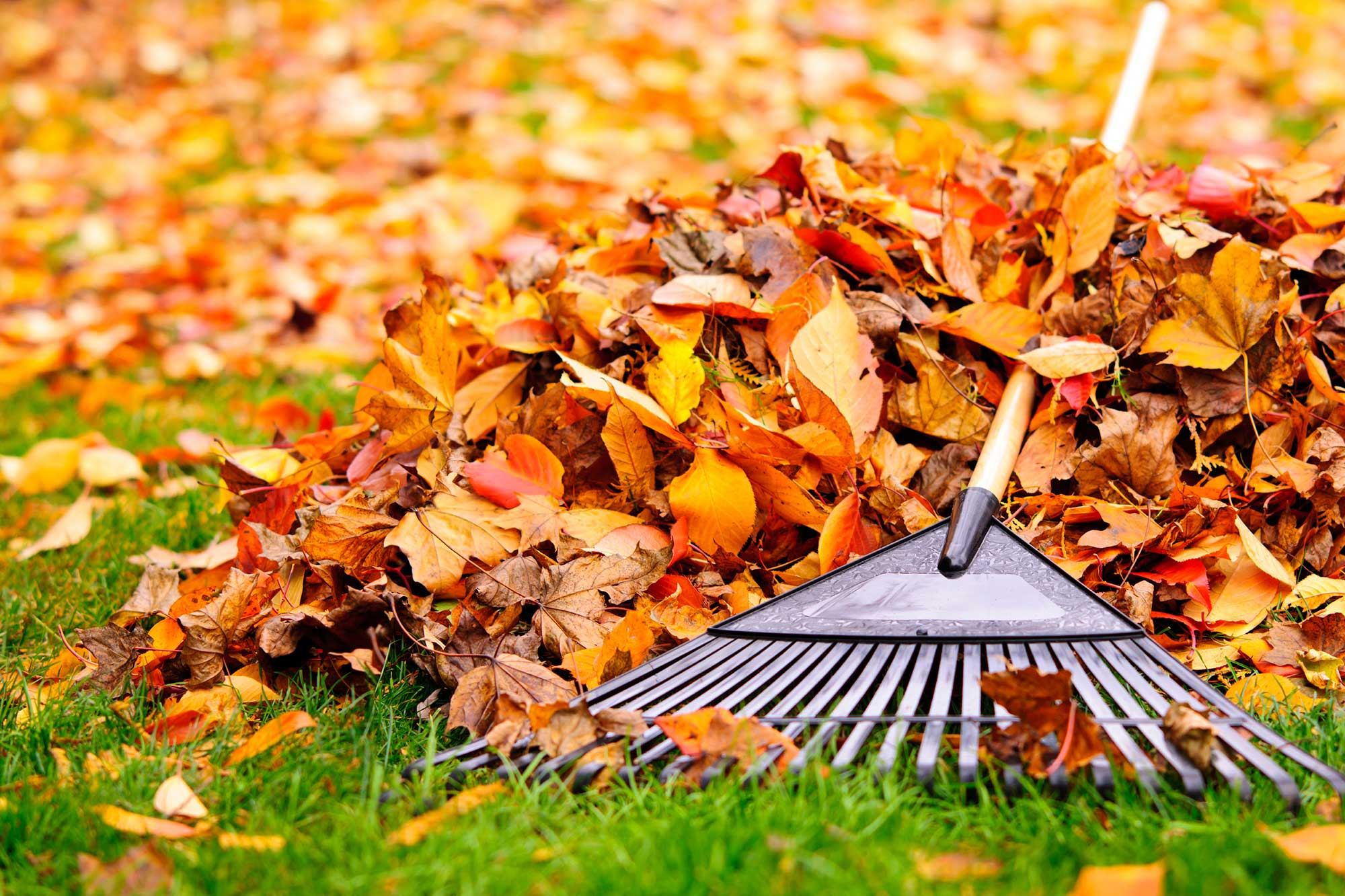 It's that time of year to start scheduling your Fall Cleanups, Aeration and Power Raking! Give us a call at 708-598-8630 to schedule an appointment.