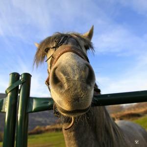 Horse 61986 1280