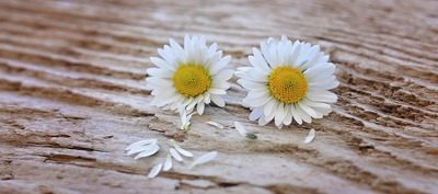 Flowers 747345 1280