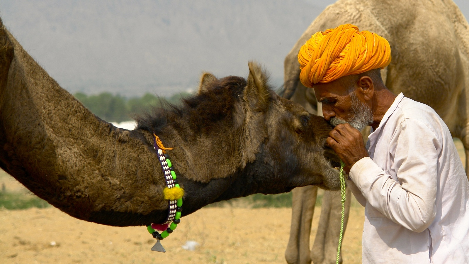 Hero Pushkar Camel Fair Marina Enrique Httpflic.Krpv7 L3p