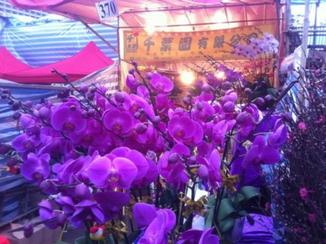 HK_CWB_維園年宵市場_Victoria_Park_Fair_-_flowers_purple_stall_Jan-2012_Ip4