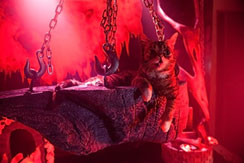 A gatinha Lil Bub e seus amiguinhos