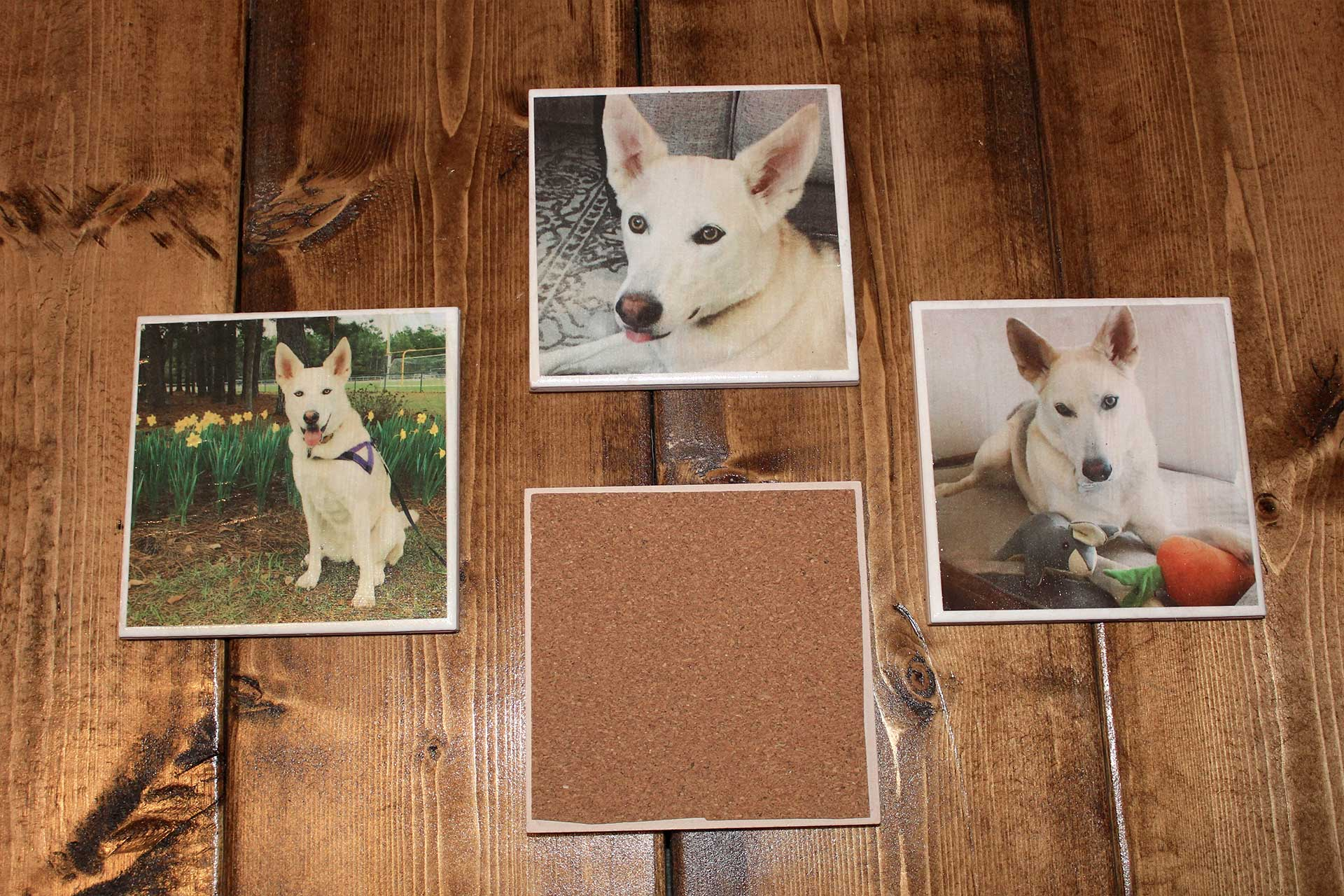 DIY Pet Picture Coasters