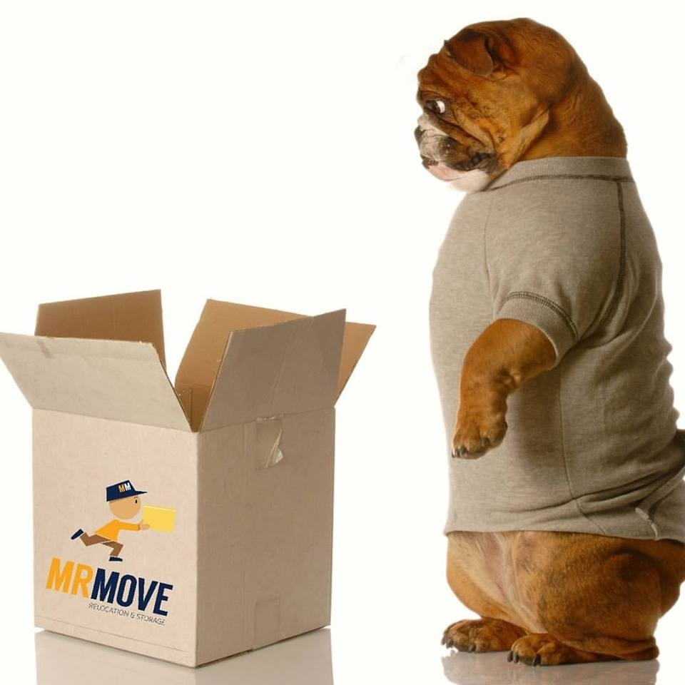 moving Dog
