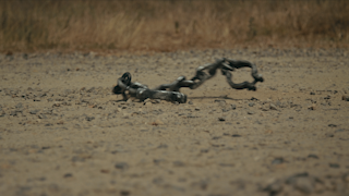 A pair of shackles are thrown to the ground thumbnail