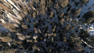 Treetops are surrounded by a blanket of snow thumbnail