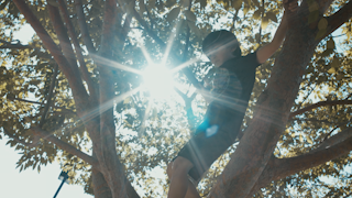 A young boy climbs a tree with sunglight shining through the branches thumbnail