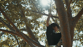 A young boy climbs around in a tree while sunglight shines through the leaves thumbnail