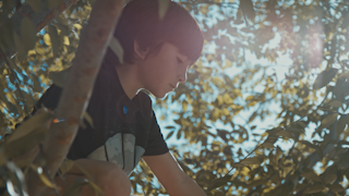A young boy sits in a tree with sunshine shining through the leaves thumbnail