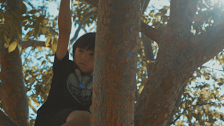 A young boy swings around branches in a tree with sun rays shining through leaves thumbnail