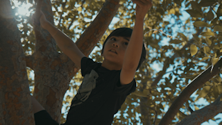 A boy climbs around in a tree with sunlight shining through leaves and branches thumbnail