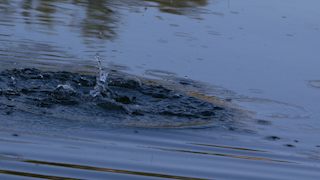 A small splash creates water ripples in a pond thumbnail