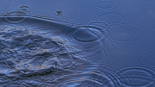 A small splash causes ripples in a pond thumbnail