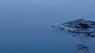 Water ripples in a pond from a splash thumbnail