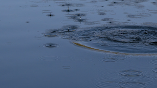 Water ripples in a blue pond thumbnail