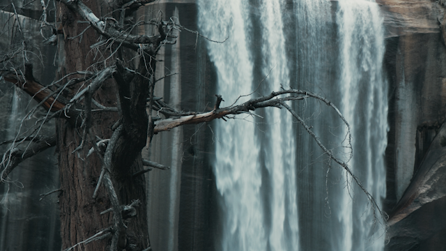 A waterfall behind a dead tree thumbnail