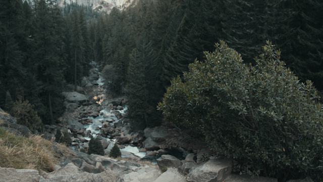A rocky riverbed flows through a forest thumbnail