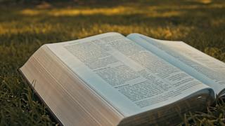 A bible open on the grass thumbnail