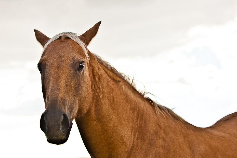 rodeo_12-jpg