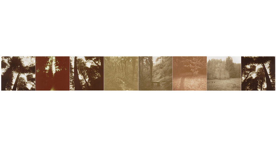 trees-jpg