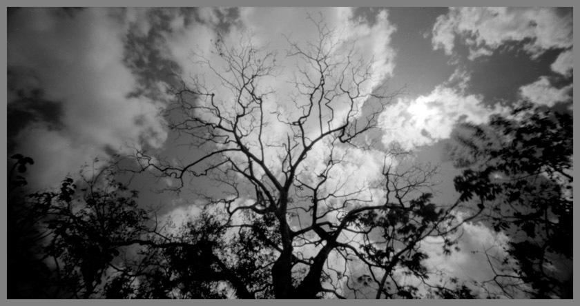 trees-of-nosara1_1-jpg