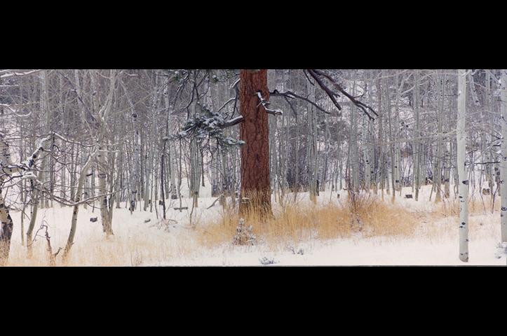 0006-4582_adjlone_pine-jpg