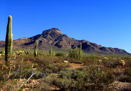 016-organ_pipe_cactus_national_monument_arizona-10-jpg