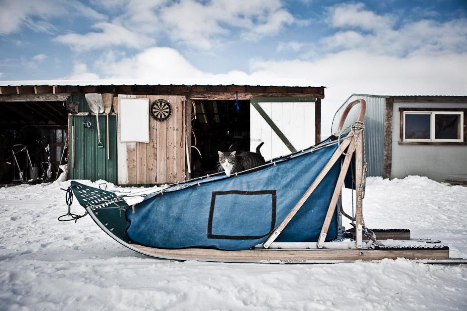 snowdogs_02-jpg