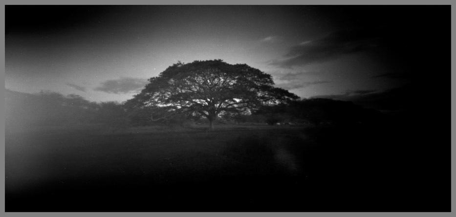 tree-to-liberia_1-jpg