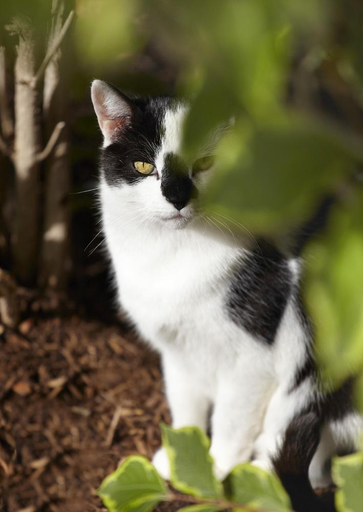 khorkoff-photo_12-006_bw-cat-043-jpg