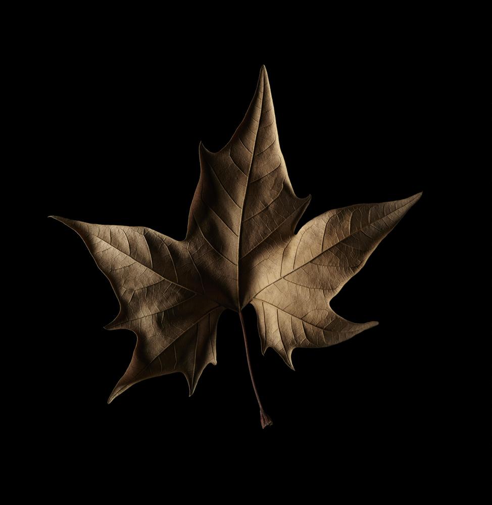 leaf-0610-jpg