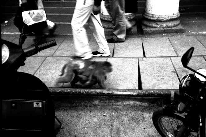 0003_376monkey_walking-jpg
