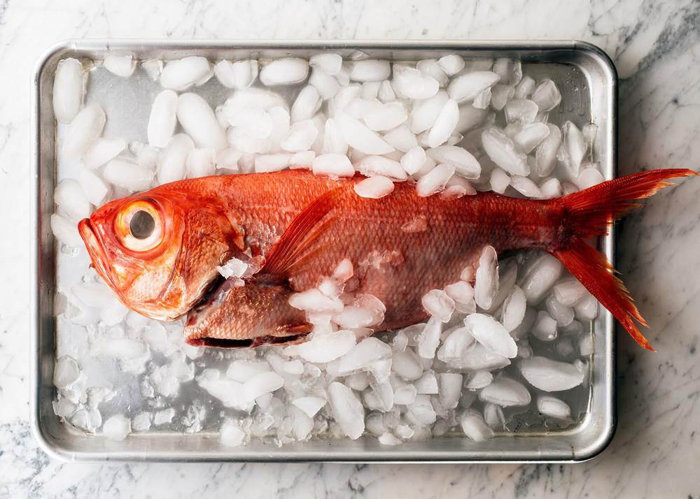 2016_0201_grillschool_seafoodopener_0111-jpg