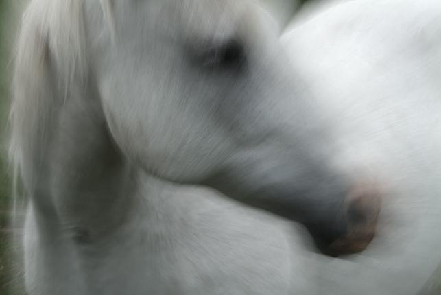 0014-147white_horse_gallery_print-jpg