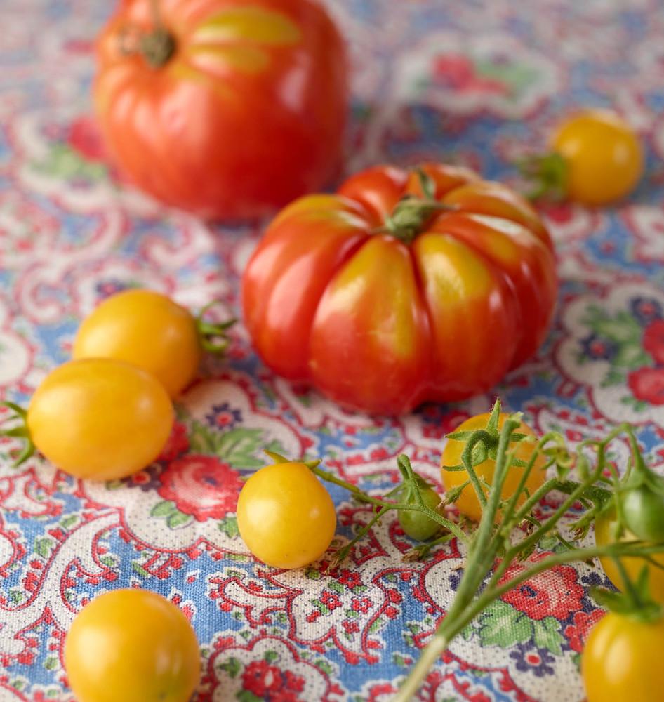 anbp_130822_pat_tomato_22-jpg