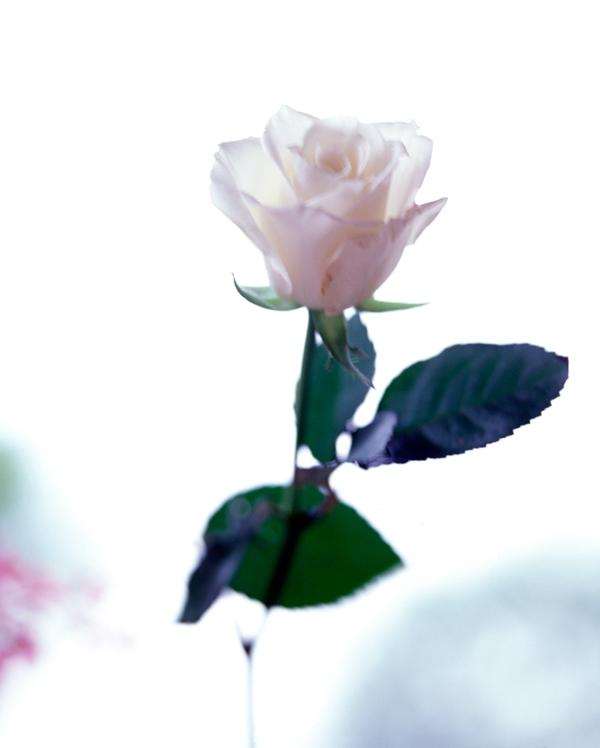 flower-jpg