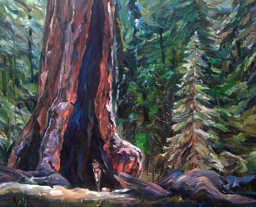 0042_595mccabe_redwoodforestpath-jpg