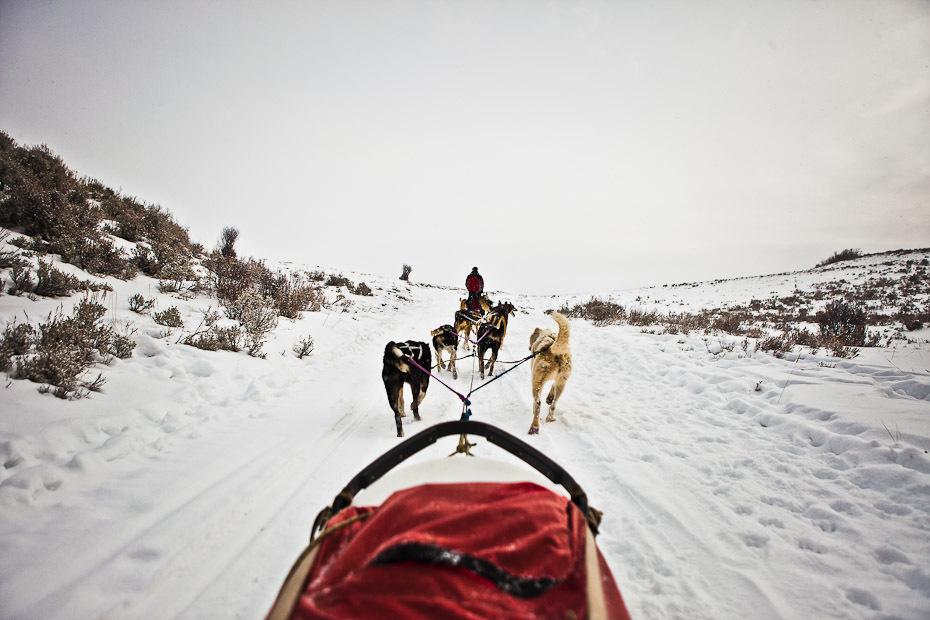 snowdogs_14-jpg