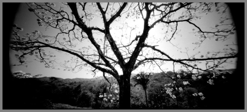 tree-nosara_1-jpg