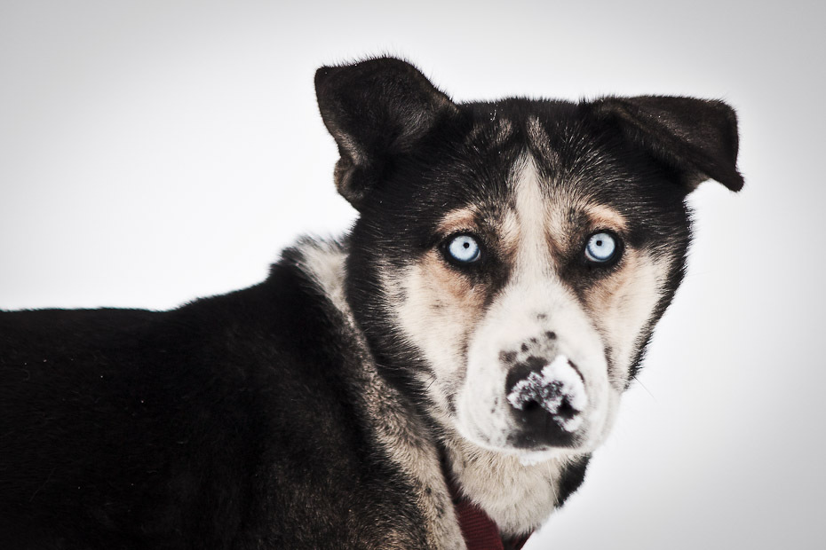 snowdogs_15-jpg