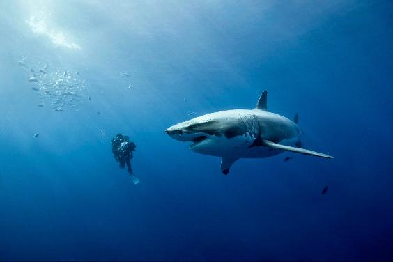 requin-montage2-jpg