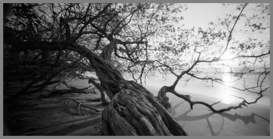 tree-giones_1-jpg
