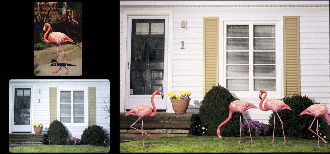 0138_flamingos-jpg